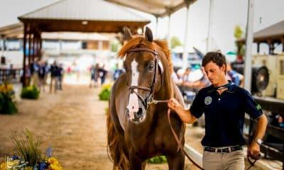 Brasileiros buscam medalha e vaga olímpica nos Jogos Equestres